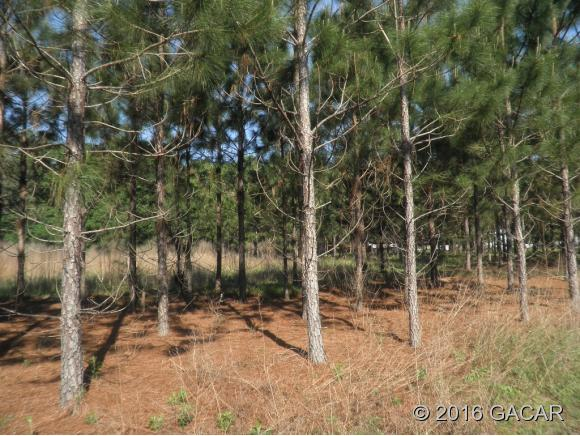 00-Vacant-lot-High-Springs-FL-32643